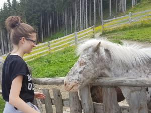 Die zotteligen Ponys auf der Reiteralm gewinnen alle Herzen