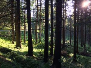 Das Altvatergebirge in Schlesien (Tschechien)