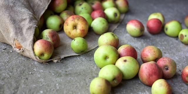 Aus diesen Früchtchen wird ein herrlicher Apfelstrudel